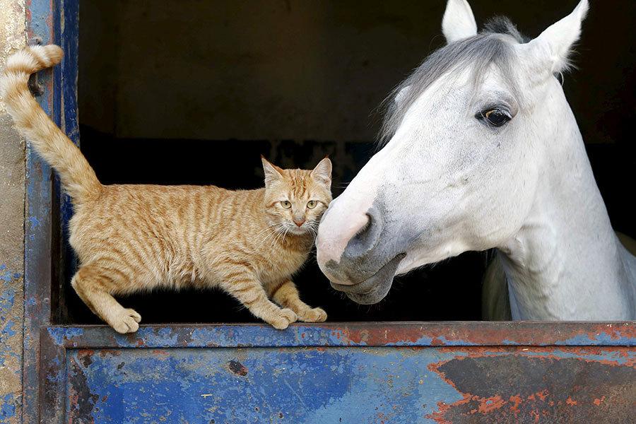 Foto_Friday_Cat_Horse_Lebanon