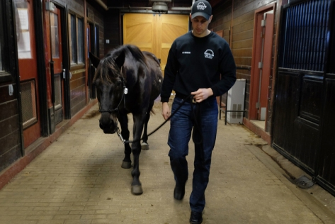 1st Lt. Daniel Nicolosi escorts Kennedy -- one of two horses available for adoption -- in the Caisson barn at Ft Myer in Arlington, VA, on Feb.17, 2016.