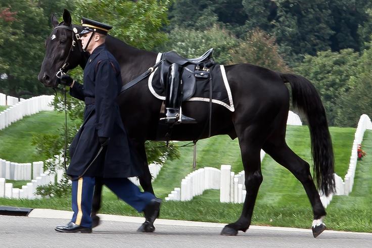 Riderless Horse.