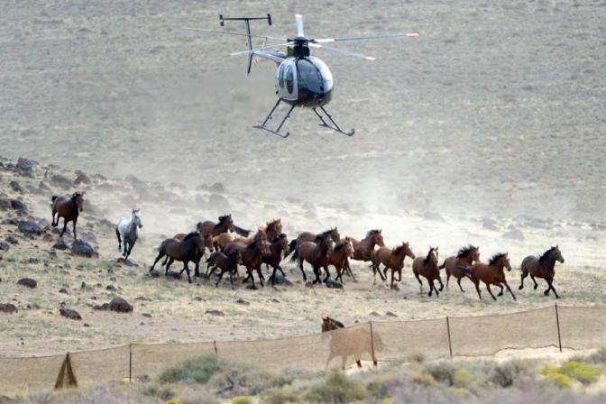 wild_horses_utah