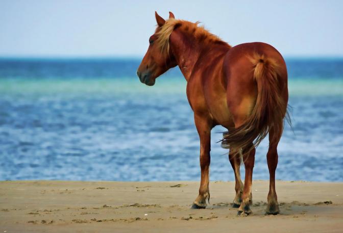 Featured_Corolla_Wild_Horse