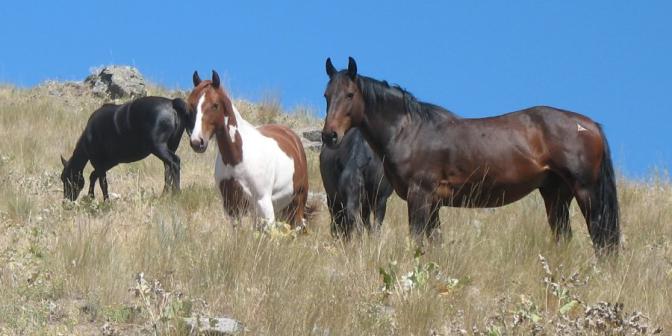 featured_Wild_Horses_via_FlatHead_Lake_us