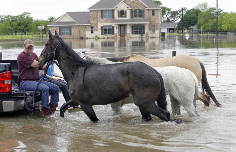 Richard Lopez and Allie Hairford-Siemens hold the reins of three horses as they lead them through flood water in Cypress, Texas, on Monday. Melissa Phillip/Houston Chronicle/AP.