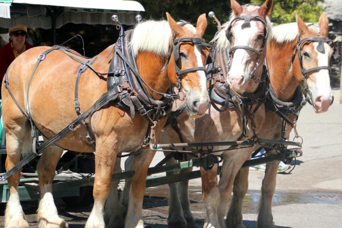 mackinac_horses_featured