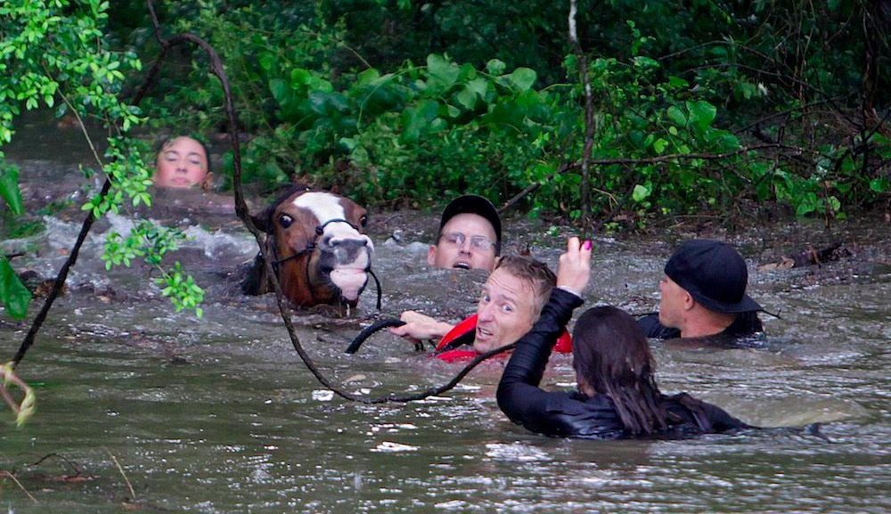 rescuers_drowning_horses_houston