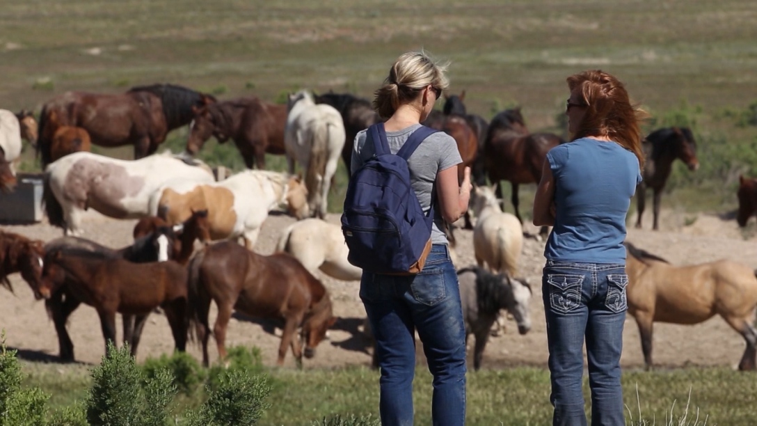 The Onaqui herd has roamed near Dugway Proving Ground for decades with little public notice. But more and more, the horses' solitude has been challenged by growing numbers of recreationists, gawkers and photo buffs. (Photo: KSL-TV)