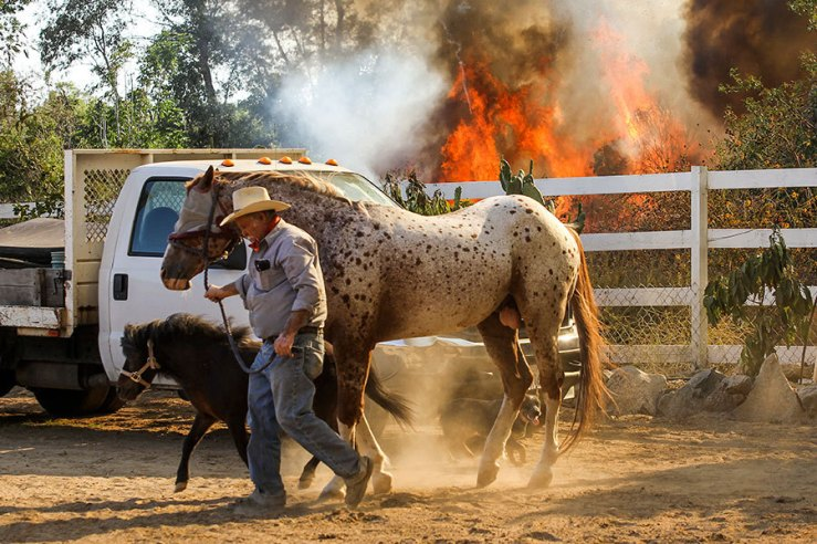 Jimmy Romo leads horses to safety as a wildfire burns in Azusa, Calif., on Monday. New wildfires erupted near Los Angeles and chased people from suburban homes as an intense heatwave stretching from the West Coast to New Mexico blistered the region. Ringo H.W. Chiu/AP.