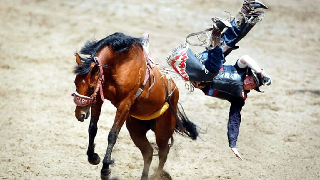 Bronco horse throws rider at the Calgary Stampede. Unattributed Google search result.