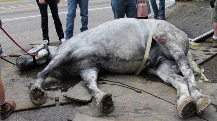 Horse drawn carriages are dangerous. The treatment of the horses forced to work in these conditions is inhumane. Take action.