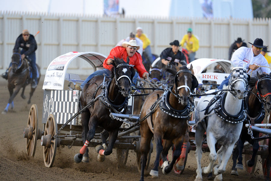 Chuckwagon Race at the Calgary Stampede - deadly to horses. Photo: Metro News Canada.