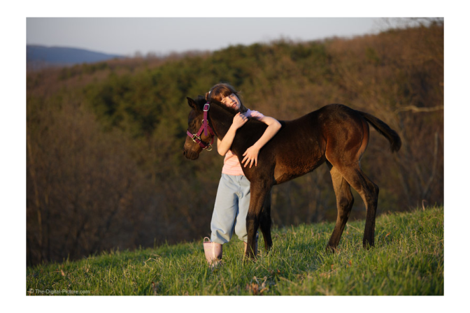 Girl hugging young horses out in a field.