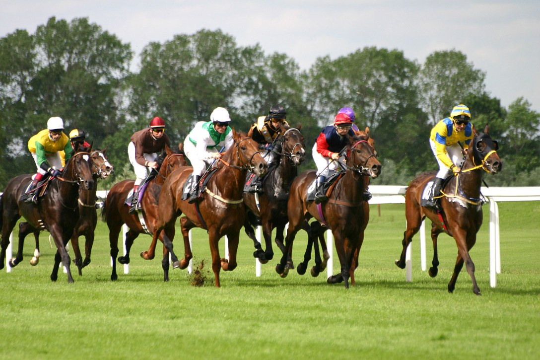 Horses racing on grass. Free use image.