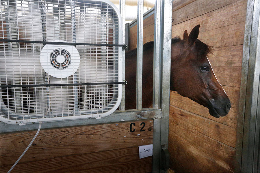 Hank, a quarter horse, stays close to a fan to keep cool inside a barn at the Illinois State Fairgrounds Thursday in Springfield, Ill. Dangerously warm conditions are in the forecast for the Midwest over the next few days. Hank will participate this weekend in the Western American Quarter Horse Association Competition. Seth Perlman/AP.