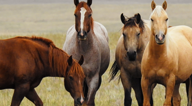 REPORTS_Four_Horses