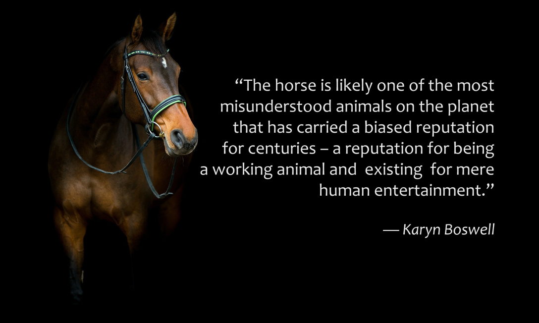 Horses most misunderstood animal on the planet quote on black background with a horse.