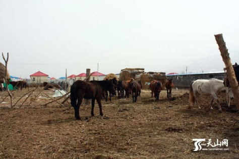 PMU Farm in Xinyuan County, China (2012).