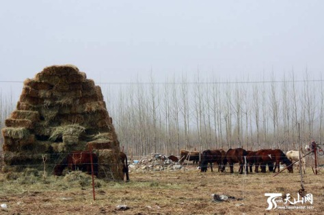PMU Farm in Xinyuan County, China (2012).