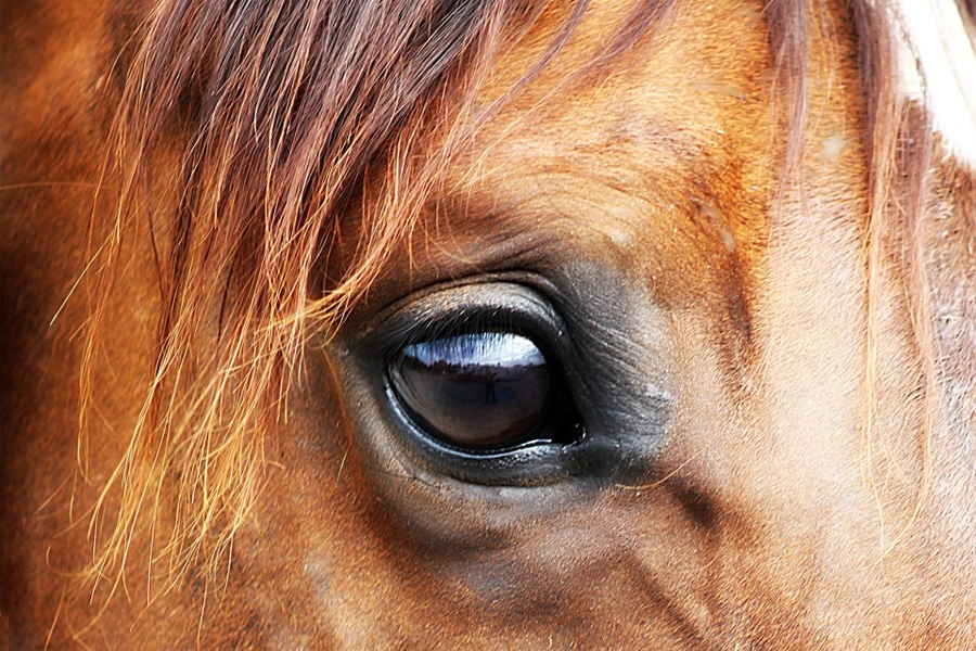 Close up of a horse's eye. Google search result. Unattributed image.
