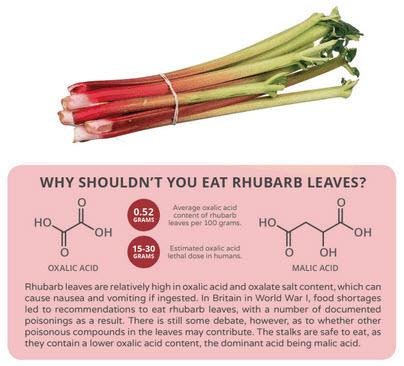 rhubarb-leaves