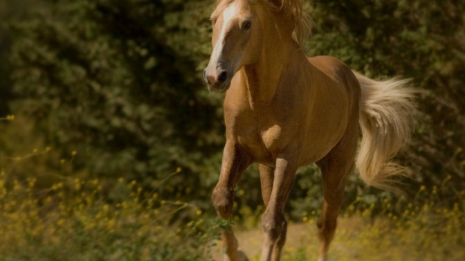 Sutter is the ASPCA® Horse of the Year
