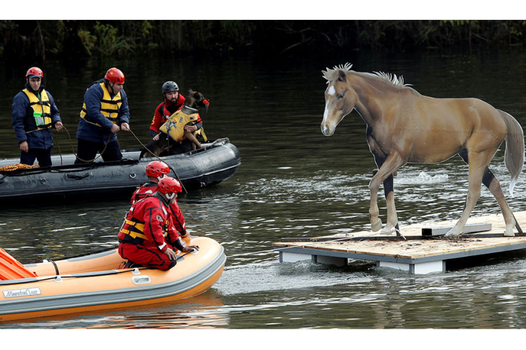 Rescue workers evacuate mock animals as part of an international field exercise organized and conducted by NATO's Euro-Atlantic Disaster Response Coordination Center in Podgorica, Montenegro, on Thursday. Stevo Vasiljevic/Reuters. Via the Christian Science Monitor.