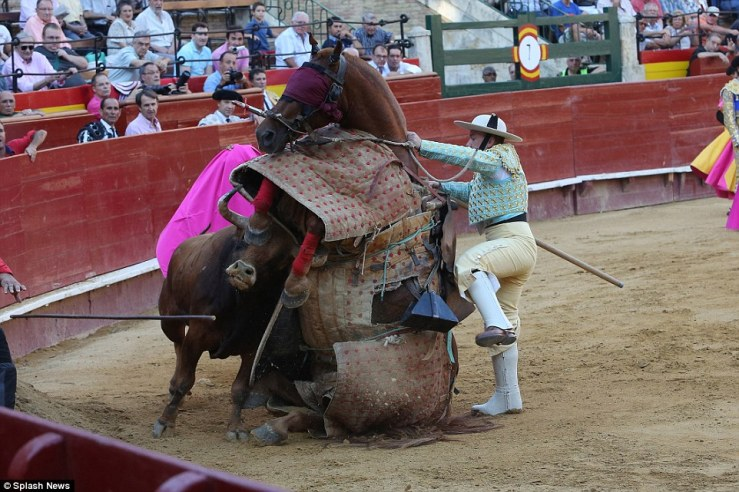 This is the terrible moment in Valencia, Spain when a horse was seriously injured during a bullfight after he was gored by the rampaging animal. Reported by the Daily Mail.