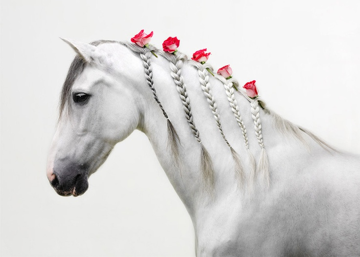 Grey Horse with roses plaited in her mane. Pinterest. https://www.pinterest.com/michaelalaskova/horse-mane-tail/.