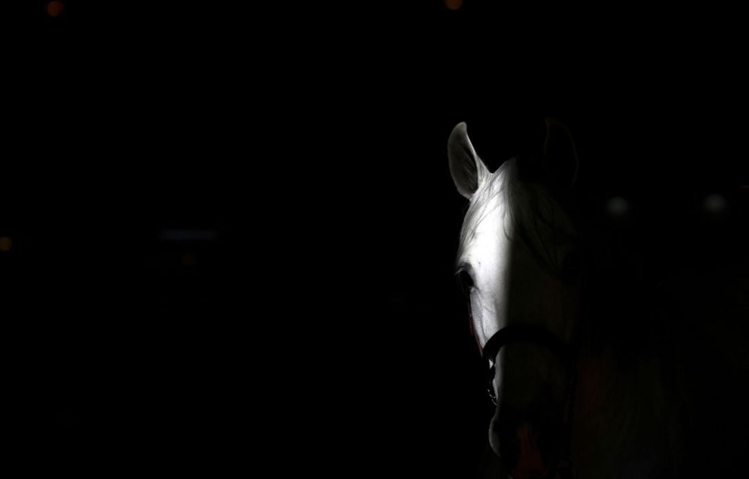 Light grey horse peeks out from the dark. Photographer unknown.