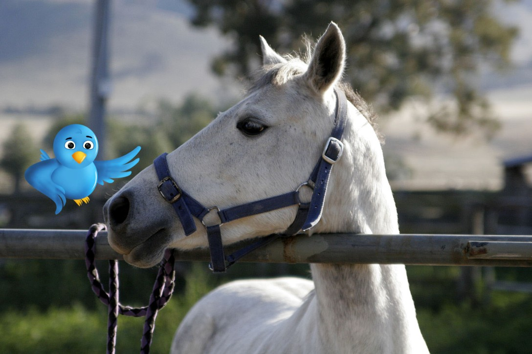 Horse Fund Twitter campaign horse and bird featured image.