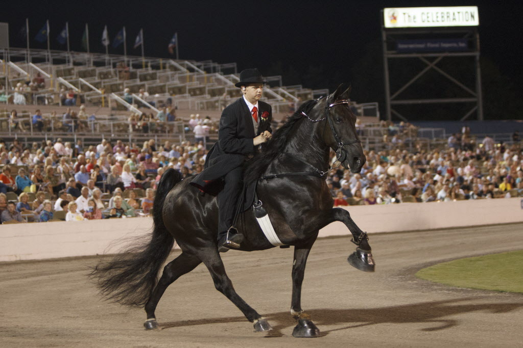 The 75th Walking Horse Celebration in Shelbyville, Tennessee on August 29, 2013. HSUS.
