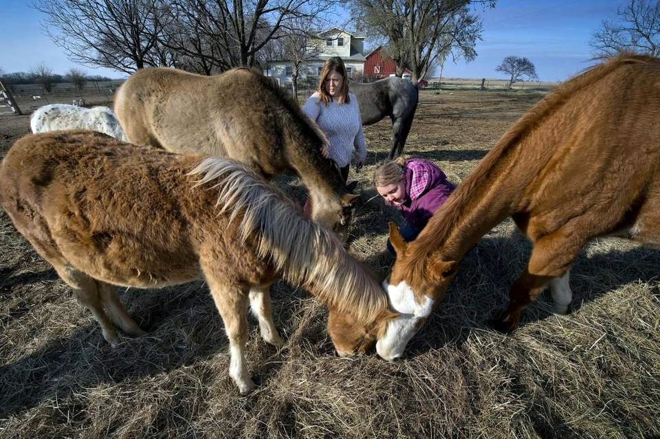 "Amy Bayes (left) and her daughter Saje Bayes run Greenwood Stables and Equine Horse Rescue outside Peabody, Kan. They buy horses from a nearby ""kill buyer"" and put them up for adoption. Keith Myers kmyers@kcstar.com Read more here: http://www.kansascity.com/news/state/kansas/article139230588.html#storylink=cpy"