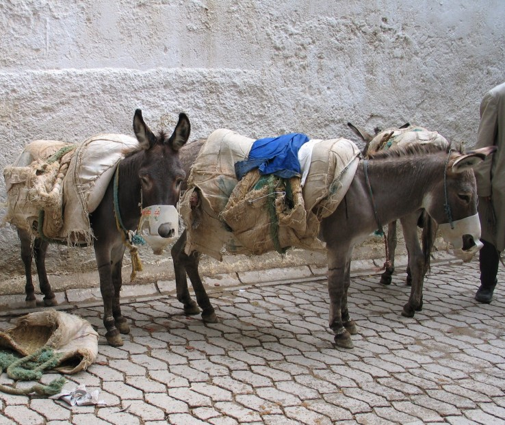 Donkeys on the West Cost of Africa. Annie Wald 2013.