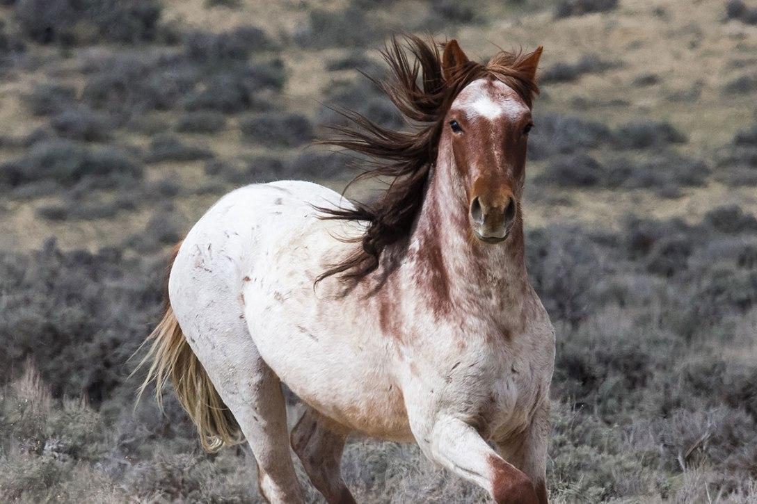 Wild Horse by Carol Walker Living Images. See http://www.livingimagescjw.com/.