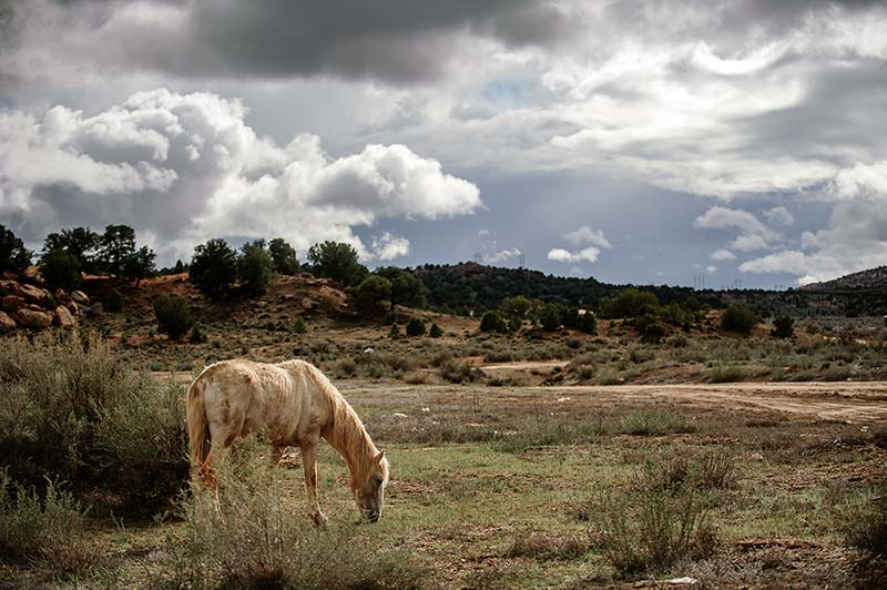 Adron Gardner A gaunt horse grazes along State Route 264 near Tse Bonito, N.M. on March 27. Navajo Times.