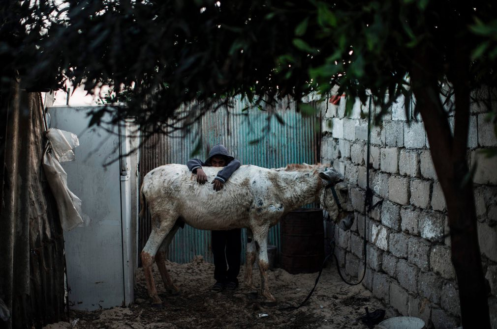 A Palestinian boy leans on a donkey outside his makeshift home in the Khan Yunis refugee camp. Photograph: Mahmud Hams/AFP/Getty Images.