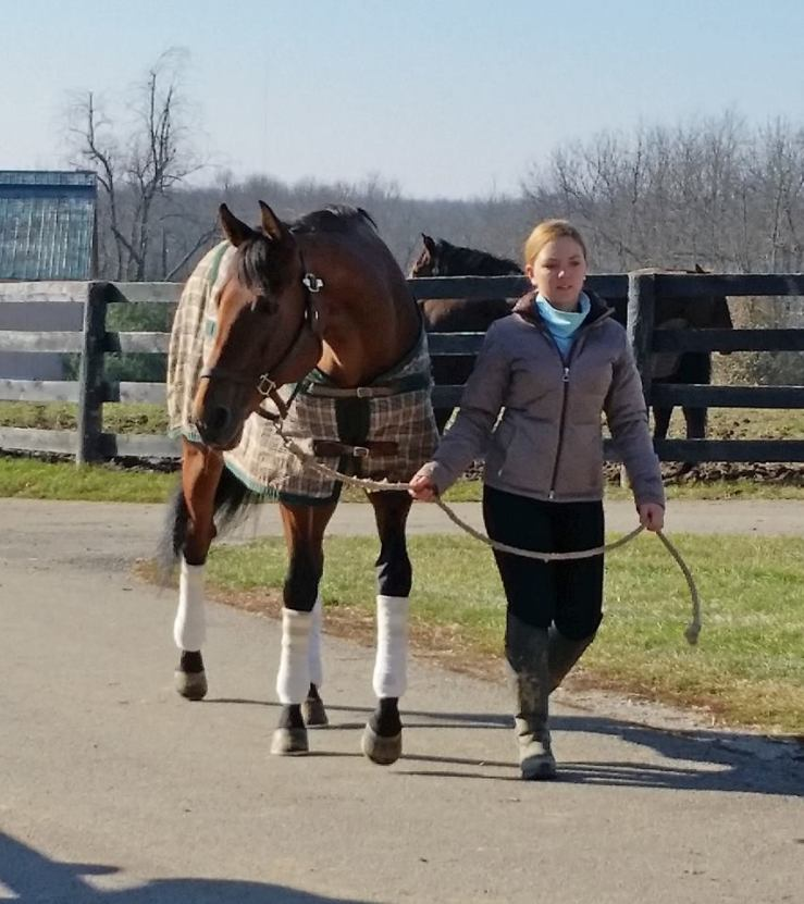 Gourmet Dinner earned more than $1 million before retiring to New Vocations Racehorse Adoption this week. The gelding will be given a big rest before training for a second career. Image: Off Track Thoroughbreds.