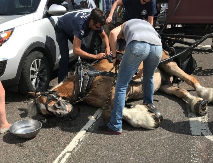 A carriage horse tripped and fell at Meeting and Hasell streets Wednesday afternoon, April 19, 2017. The horse was attached to a carriage with about a dozen passengers and didn't try to get up until the harness was removed, according to Dan Riccio, the city's livability and tourism director. The horse is named Big John and is owned by Charleston Carriage Works. Photo: Ellen Harley.