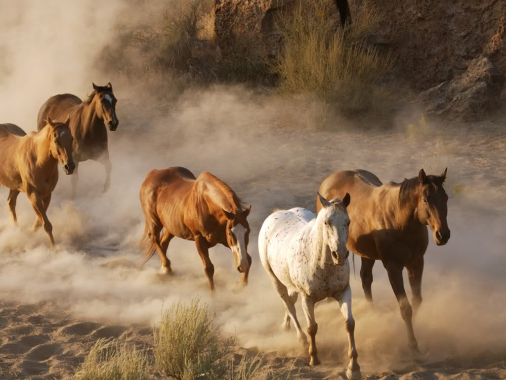 Great Wallpaper Horse National Geographic - featured-wild-horses-what-gives  Gallery_604334.jpg?w\u003d1024