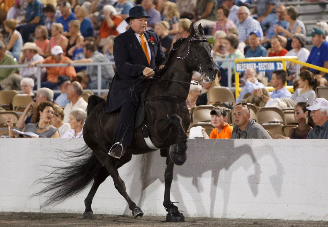 The 75th Walking Horse Celebration in Shelbyville, Tennessee on August 29, 2013.