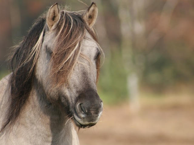 A horse from the groups that run free in coal country in Eastern Kentucky. Accredited to JERVIS PICS.