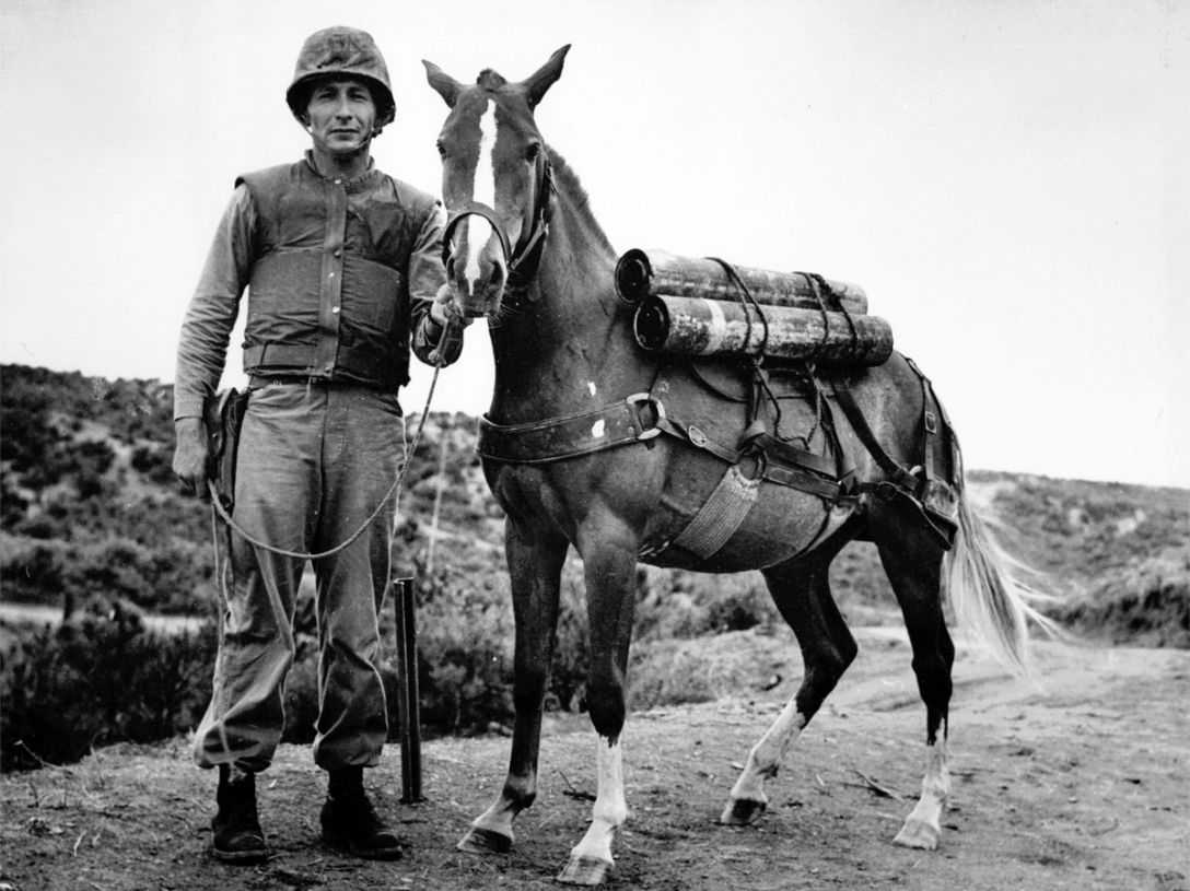 Sgt. Reckless. Source: http://humanevents.com/2014/07/30/sgt-reckless/.