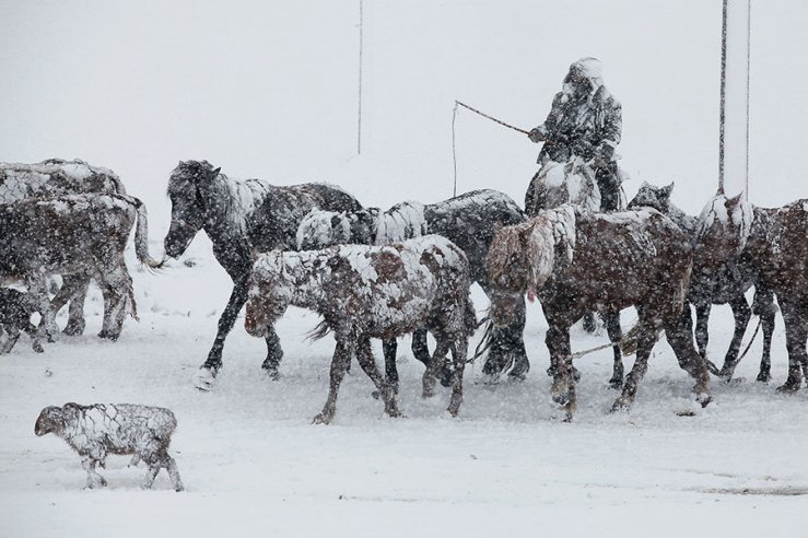 A man herds livestock in heavy snow in Altay, Xinjiang Autonomous Region, China, on Tuesday.Reuters.