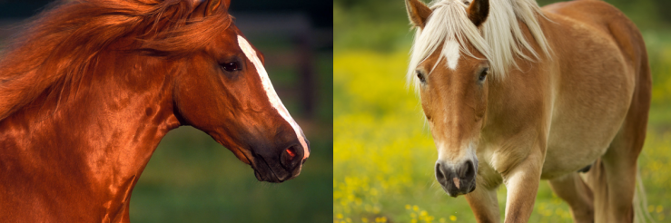 Click image to visit The Horse Fund Gift Shop.