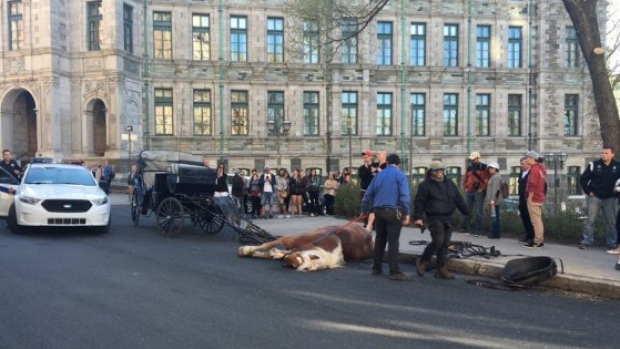 Witnesses say the horse pulling the second carriage tripped and fell on the ground. (Marie-Maude Pontbriand/Radio-Canada)