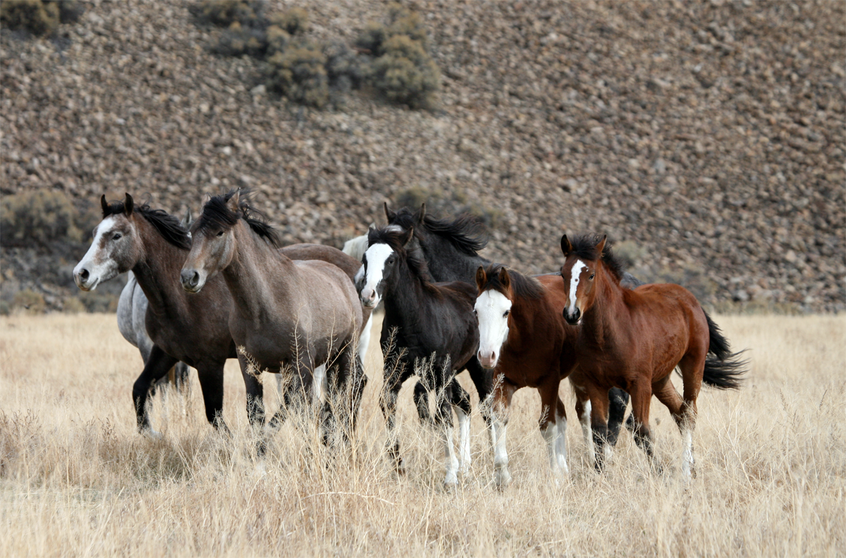 Cool Wallpaper Horse Dual Screen - featured_challis_wild_horses  Graphic_394124.png