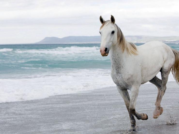 White horse on beach. From Pinterest.