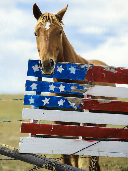 Calling all Americans to call their lawmakers in Washington to take a strong stand on behalf of American horses. Photographer unknown.