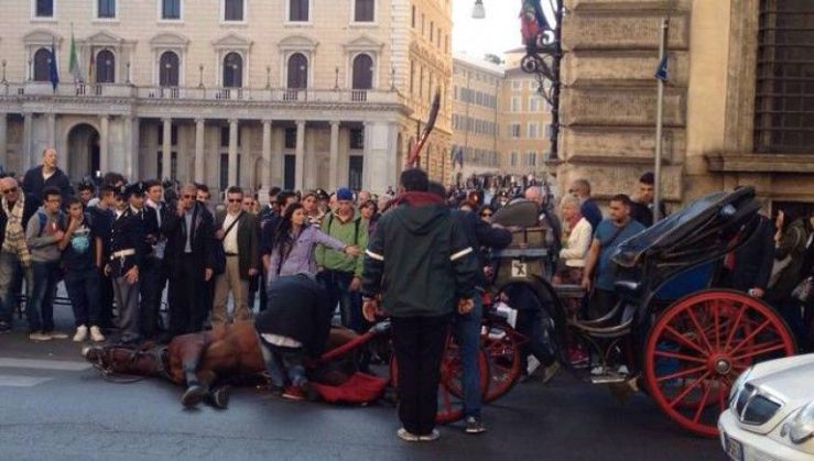 Downed botticelle horse, Rome, Italy. Source not cited.