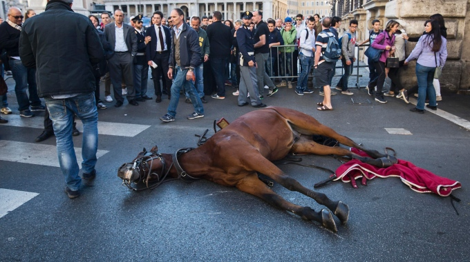 Downed botticcelle horse, Rome, Italy. Source not cited.