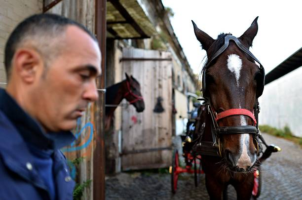 "Angelo Sed, president of the Romans horse-drawn carriage drivers (botticelle), prepares his horse ""Inventore"" before a day of work on October 2, 2014 in Rome. The Botticelle are the traditional Roman carriages used by tourists to sight Rome's historical center. ALBERTO PIZZOLI/AFP/Getty Images."